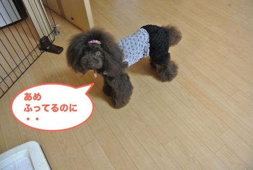 DSC_4660_01.jpg