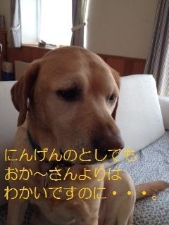 ___20140204142022f5a.jpg