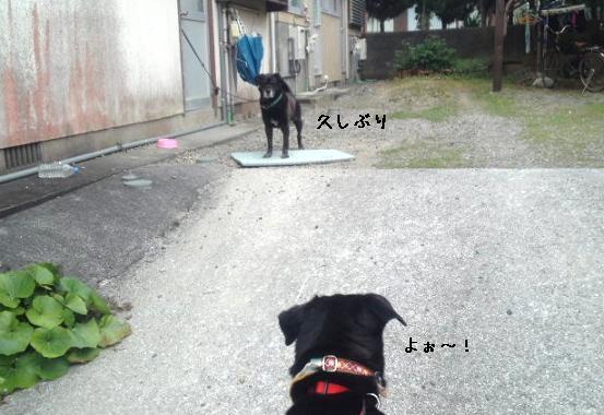 ロンくんおひさ~!