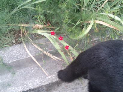お星さまのお花