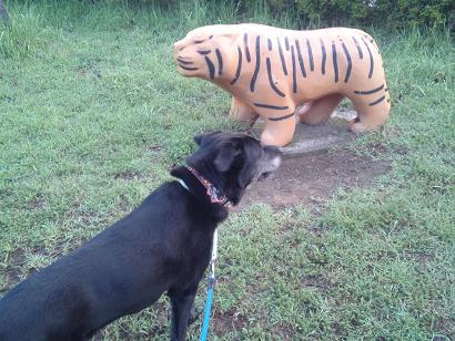 トラと黒豹