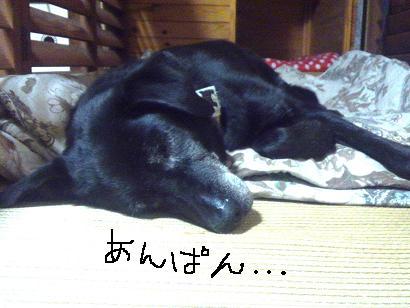 夢で○○○○