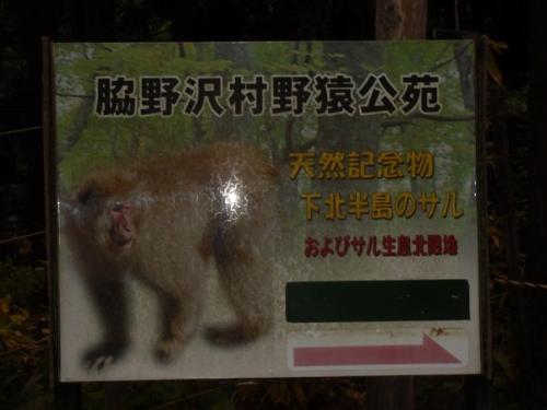 脇野沢・猿