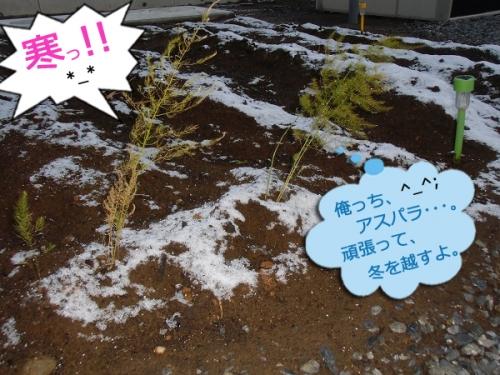 今朝の畑②