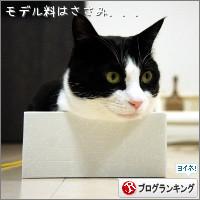 dai20140123_banner.jpg