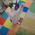 紫の獲物、ゲット!