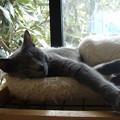 日向の猫ベッドでクタ~ッ