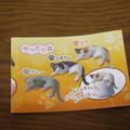 ゆったり猫3種