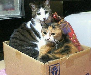 箱の中でリラックス♪