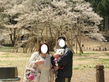 淡墨桜2013.4.8