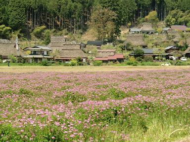 北村のレンゲ畑