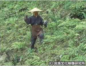 奈良田アワ種蒔き02300