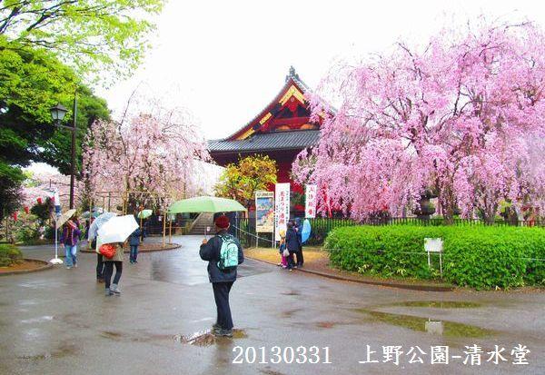 0331sakura01.jpg