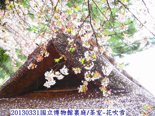 0331sakura07.jpg