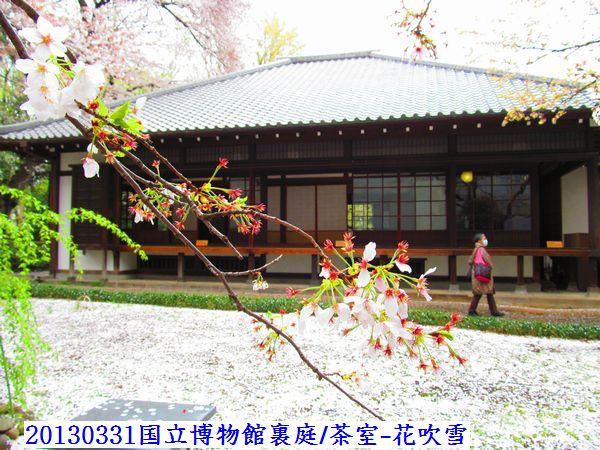 0331sakura08.jpg