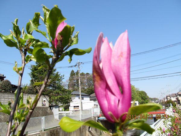 0412kawazoi03.jpg
