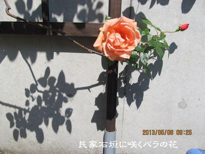 0508bara01.jpg