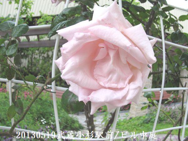 0519nakahawa03.jpg