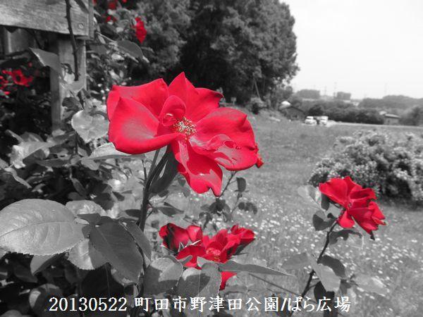 0522notsuda02.jpg