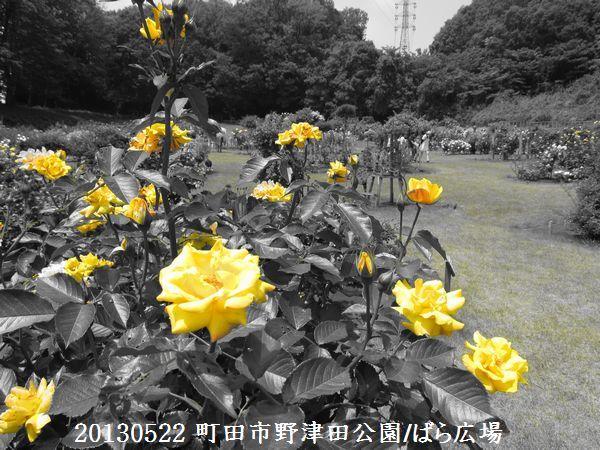 0522notsuda03.jpg