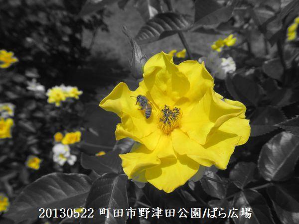 0522notsuda05.jpg