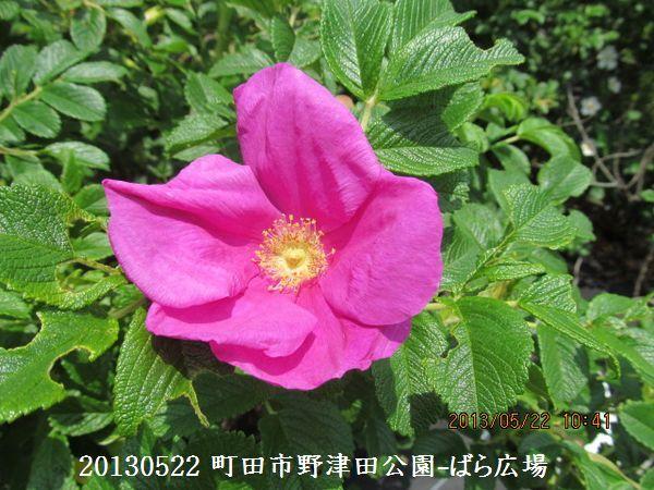 0522notsuda12.jpg