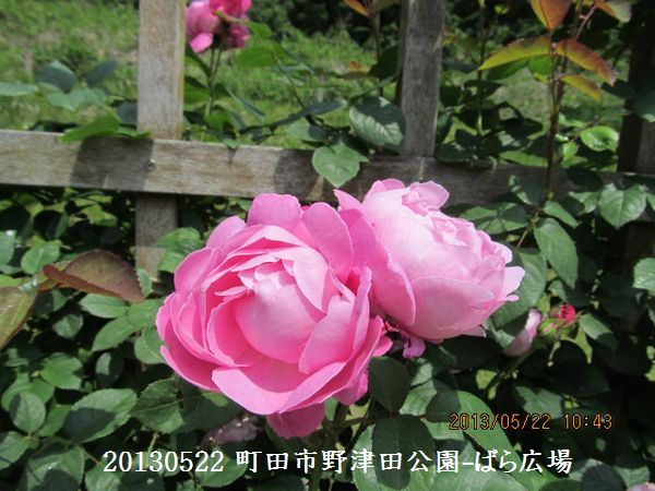 0522notsuda13.jpg