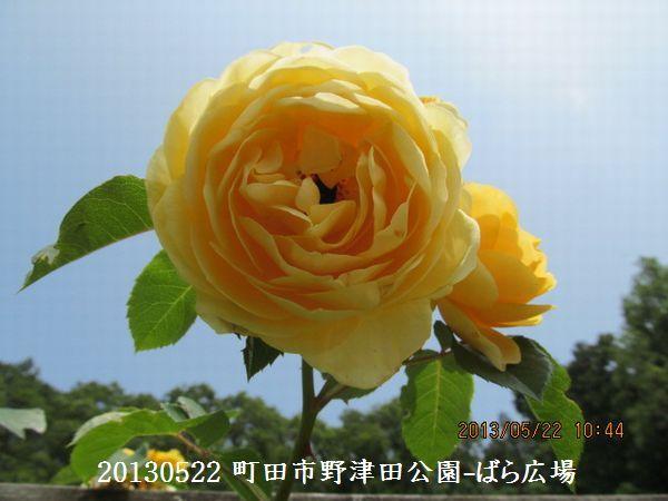 0522notsuda14.jpg