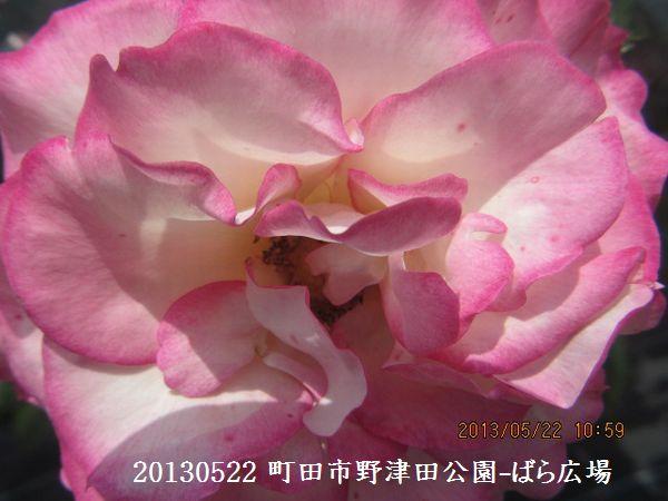 0522notsuda16.jpg