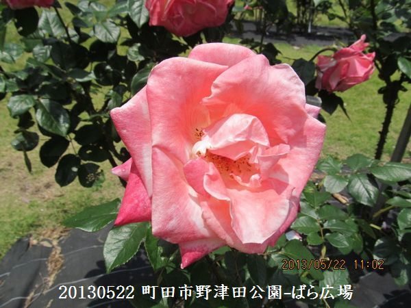 0522notsuda17.jpg