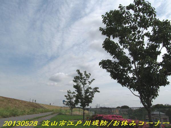 0528edogawa15.jpg