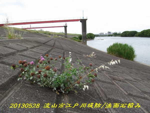 0528edogawa17.jpg
