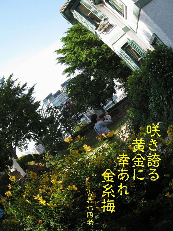 20130602kinshibai-1s.jpg