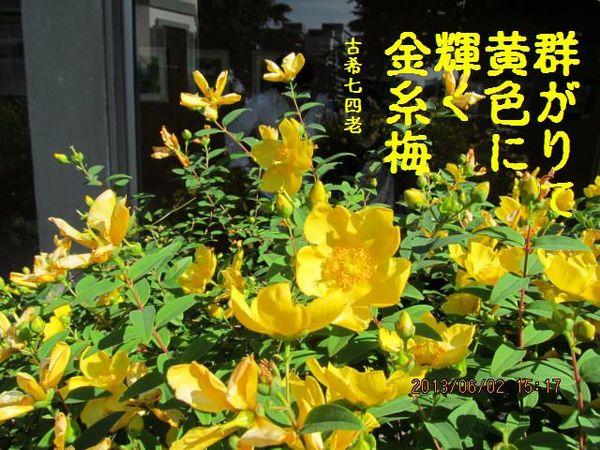 20130602kinshibai-3.jpg
