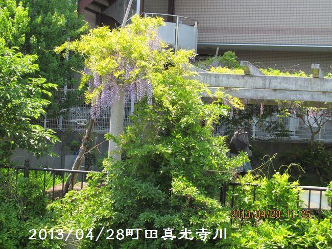 2013fiji06.jpg