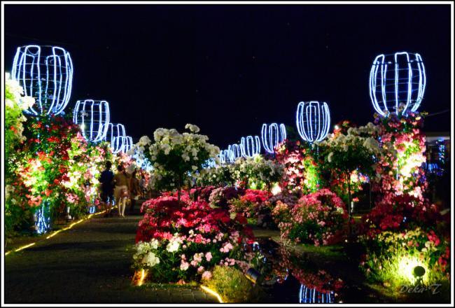 2013年5月26日ハウステンボスバラ祭 (117)