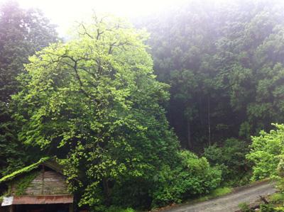 新緑と森の香り