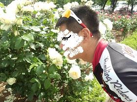20130519 rose festival (1)