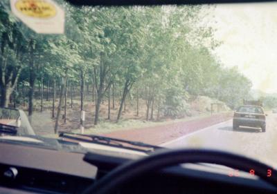 馬2ゴムの木園.JPG