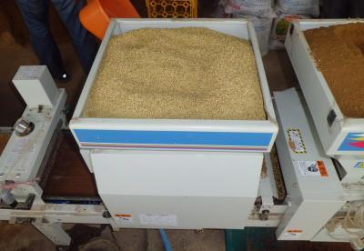 米種蒔4月6日6種籾 (2)