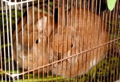 動物4月6日ウサギ.JPG