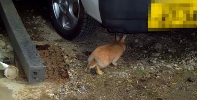 動物4月6日ウサギ放飼い