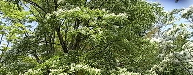RIMG1573-crop.jpg
