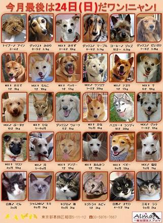 ALMA ティアハイム 11月24日 参加犬猫一覧 final