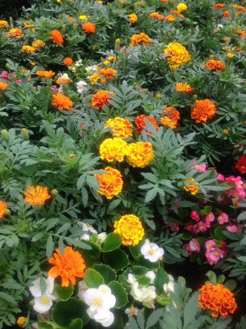 2013July_flowers.jpg