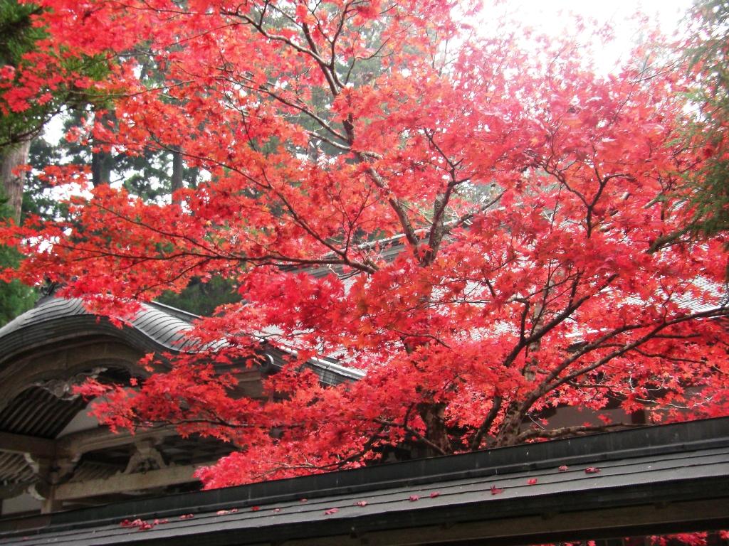 2010-11-16-CIMG0924.jpg