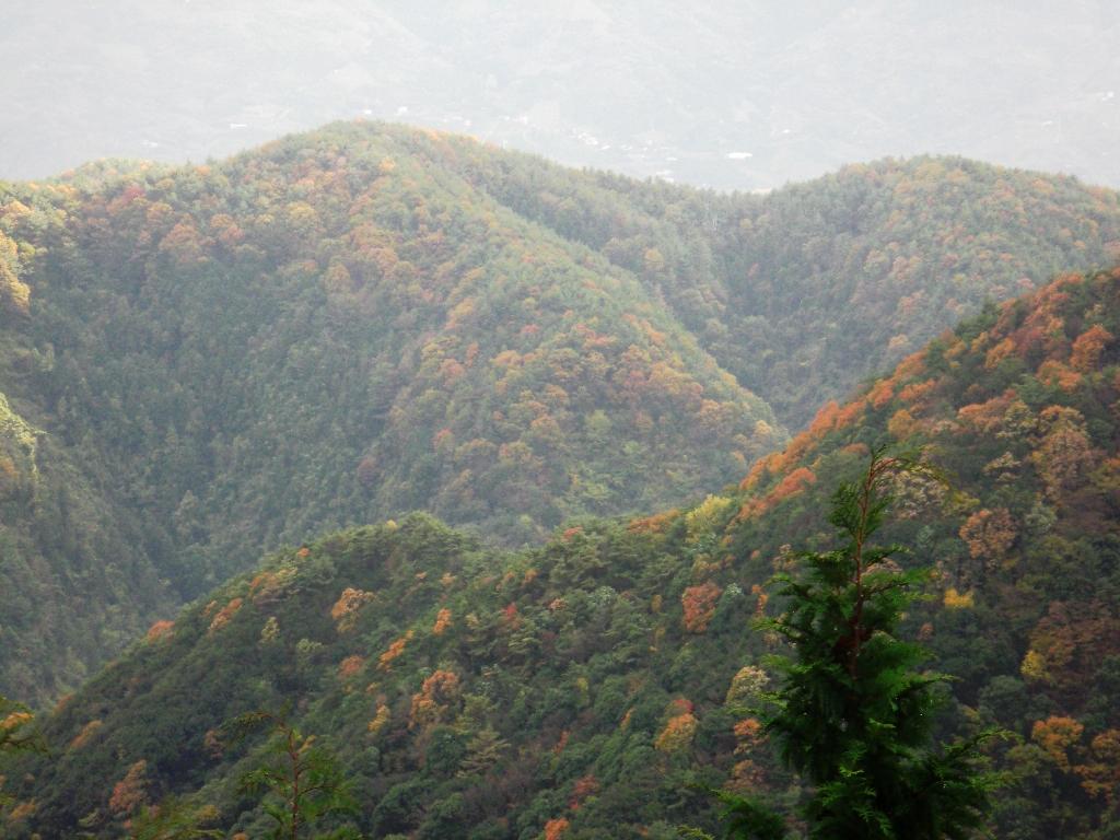 2010-11-24-CIMG0930.jpg