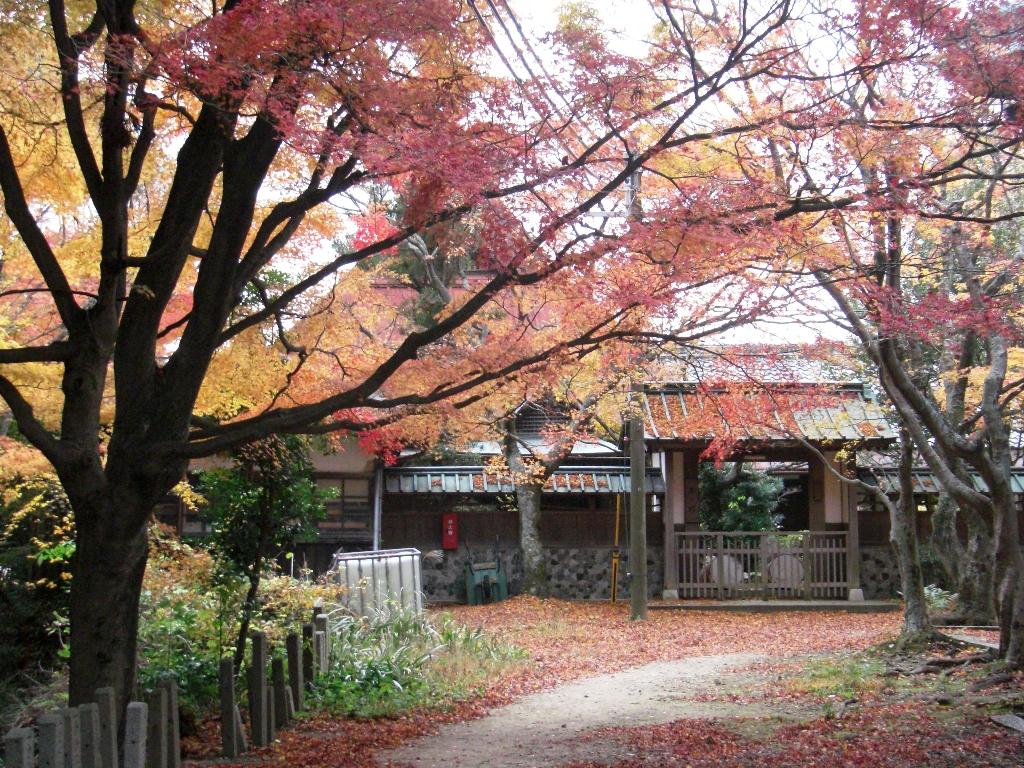 2010-11-29-CIMG0950.jpg