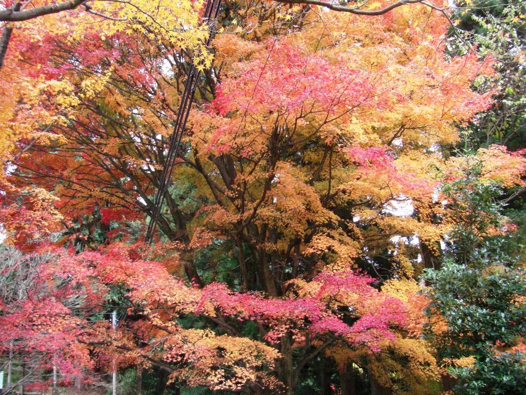 2010-11-29-CIMG0951.jpg