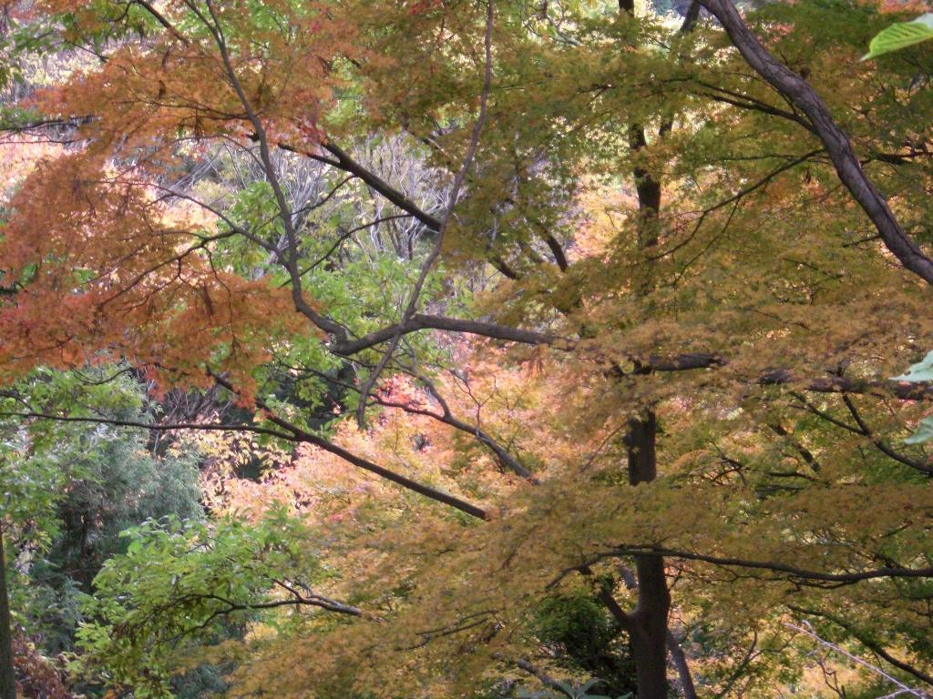 2010-11-29-CIMG0952.jpg